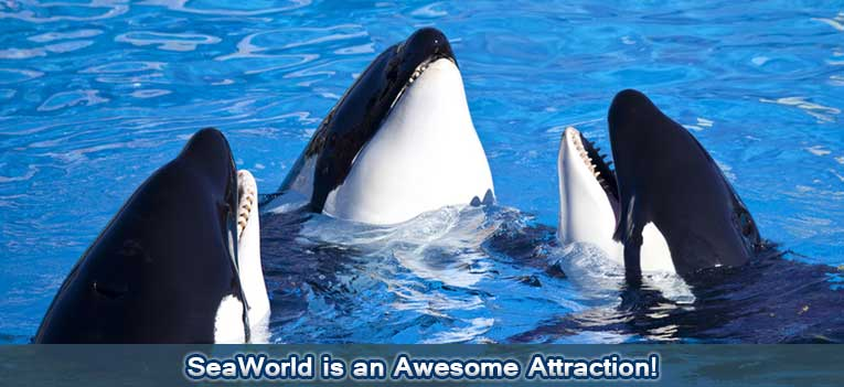 new-slideshow-sea-world