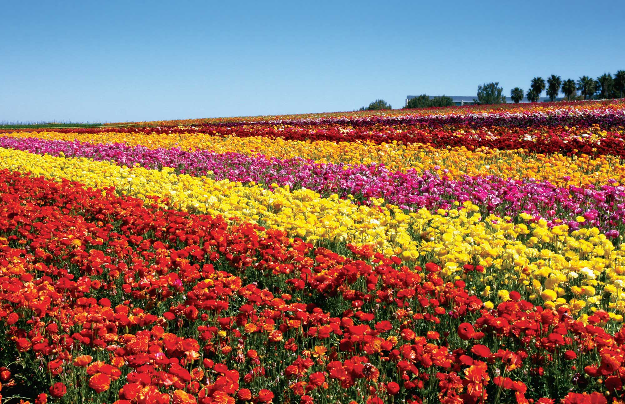 Carlsbad flower fields discount coupon 2018